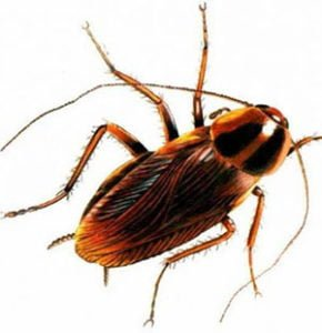 cockroach knox pest control