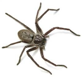 spider knox pest control